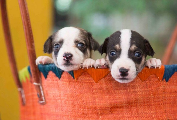 Animal Adoption and Rescue Team, Pune to organize an adoption camp on December 17