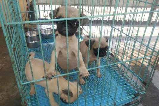 Pet trade in urgent need of regulation