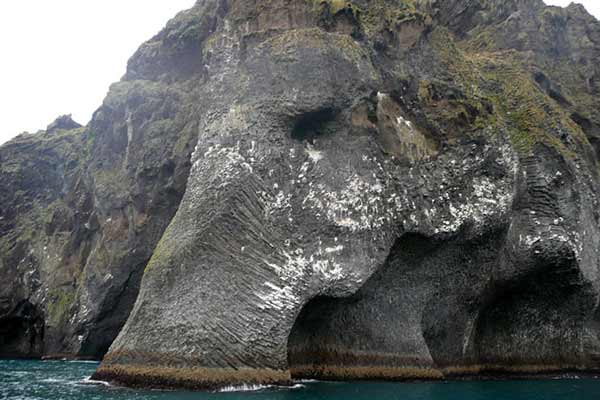 Giant sea elephant emerges from the ocean