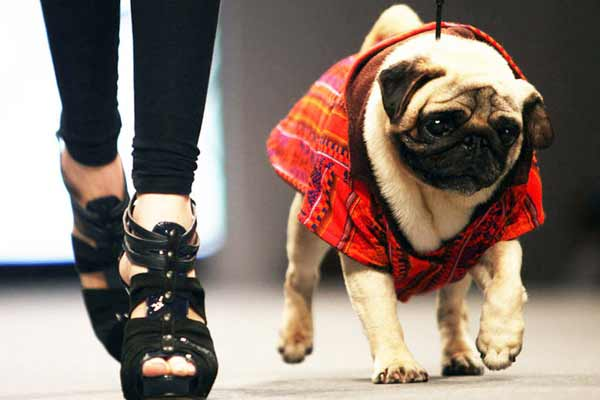 Paws on the Ramp - an unique fashion show