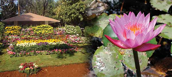 The Empress Garden to Organize the Flower Exhibition