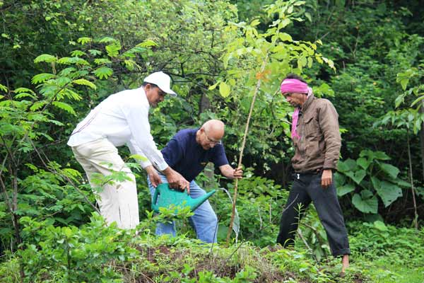 More than 500 trees planted during 'Smrutivan' event at Forest Trails, Bhugaon