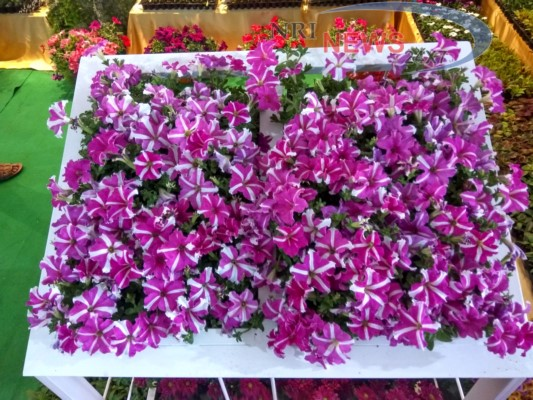 Pune to Host a Blooming Exhibition