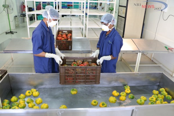 Rare ISO certification for FarmLinkAgri-startup gets accreditation for food safety management systems