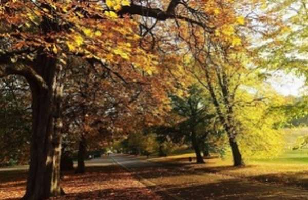 Government delivers the new £10m fund to plant over 130,000 urban trees
